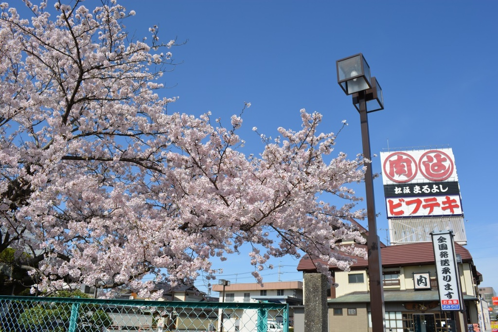 まるよしの桜