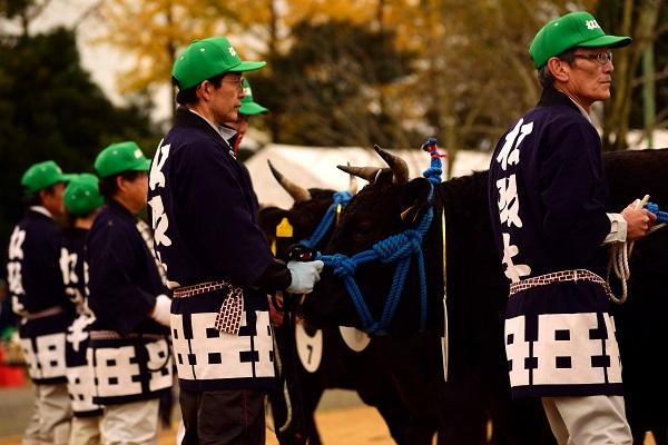 松阪肉牛共進会に出場した 特産松阪牛 の様子